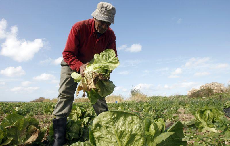 Portugal sofre de contaminação crónica de herbicidas com glifosato